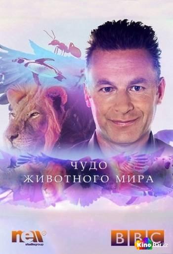 Фильм Чудо животного мира 6 серия смотреть онлайн