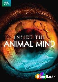 Фильм BBC. Животный интеллект. смотреть онлайн