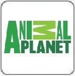 Смотреть онлайн Animal Planet