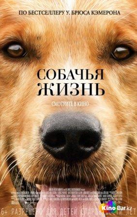 Фильм Собачья жизнь смотреть онлайн